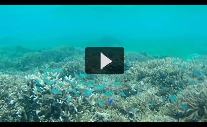 備瀬の海を動画でご紹介